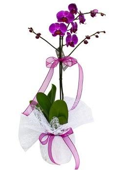 Tek dallı mor orkide  Sinop çiçek siparişi sitesi