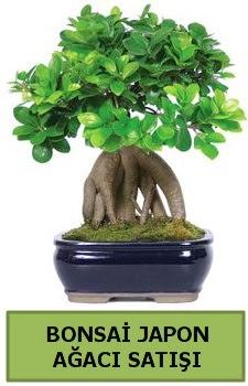 Bonsai japon ağacı satışı  Sinop internetten çiçek satışı