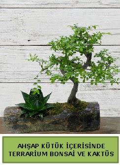Ahşap kütük bonsai kaktüs teraryum  Sinop 14 şubat sevgililer günü çiçek