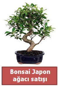 Japon ağacı bonsai satışı  Sinop cicek , cicekci