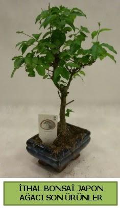 İthal bonsai japon ağacı bitkisi  Sinop yurtiçi ve yurtdışı çiçek siparişi