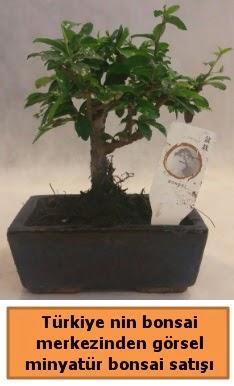 Japon ağacı bonsai satışı ithal görsel  Sinop hediye çiçek yolla