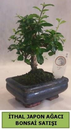 İthal japon ağacı bonsai bitkisi satışı  Sinop çiçek siparişi sitesi