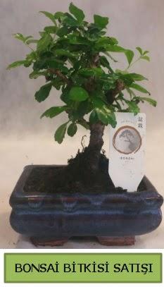 Bonsai ithal görsel minyatür japon ağacı  Sinop internetten çiçek siparişi