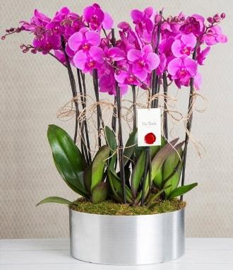 11 dallı mor orkide metal vazoda  Sinop ucuz çiçek gönder