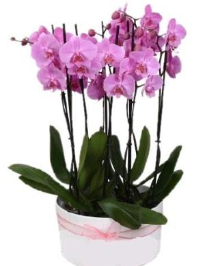 Beyaz seramik içerisinde 7 dallı mor orkide  Sinop çiçek siparişi sitesi