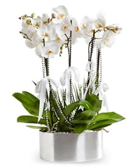 Beş dallı metal saksıda beyaz orkide  Sinop hediye çiçek yolla