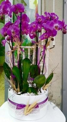 Seramik vazoda 4 dallı mor lila orkide  Sinop hediye sevgilime hediye çiçek