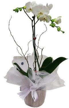 Tek dallı beyaz orkide  Sinop çiçek online çiçek siparişi
