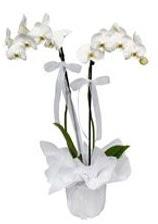2 dallı beyaz orkide  Sinop çiçek yolla
