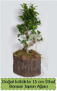 Doğal kütükte İthal bonsai japon ağacı  Sinop çiçekçi mağazası