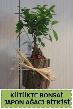 Kütük içerisinde doğal bonsai ağacı  Sinop çiçek siparişi sitesi