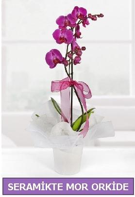 Seramik içerisinde birinci kalite tek dallı mor orkide  Sinop çiçek , çiçekçi , çiçekçilik