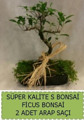 Ficus S Bonsai ve arap saçı  Sinop çiçek siparişi sitesi