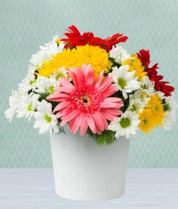 Seramik Vazoda Gelbera ve Papatya  Sinop çiçekçi mağazası
