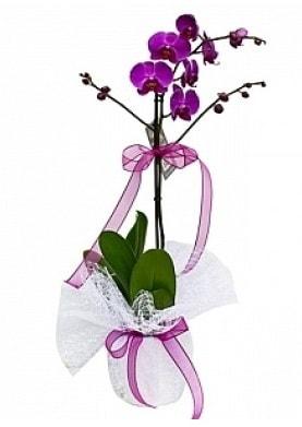 Tekli Mor Orkide  Sinop hediye çiçek yolla