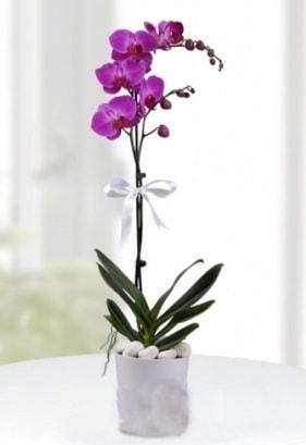 Tek dallı saksıda mor orkide çiçeği  Sinop uluslararası çiçek gönderme