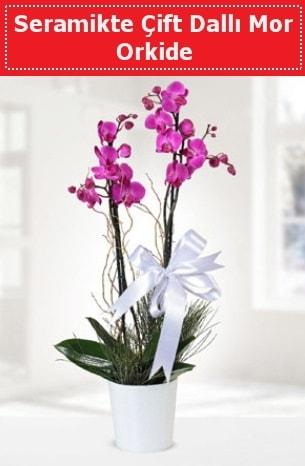 Seramikte Çift Dallı Mor Orkide  Sinop güvenli kaliteli hızlı çiçek