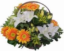 Sinop çiçekçi telefonları  sepet modeli Gerbera kazablanka sepet